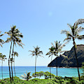 Palm Trees Along The Coast Of Waimanalo by Stocktrek Images