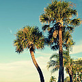 Palm Trees At Sarasota by Patricia Awapara