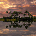Palm Trees At Sunset by Debra and Dave Vanderlaan
