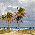 Palm Trees At The Beach by Les Palenik