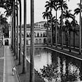 Palm Trees Bordering A Pool by Luis Lemus