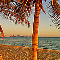 Palm Trees By A Restaurant On The Beach In Bahia Kino-sonora-mexico by Ruth Hager