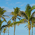 Palm Trees by Doug LaRue