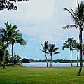 Palm Trees In Oahu by Athena Mckinzie