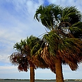 Palm Trees In The Wind by Debra Forand
