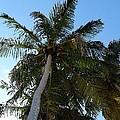 Palm Trees by Nicki Bennett