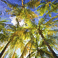 Palm Trees Of Aruba by David Letts