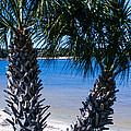 Palm Trees Of Gulf Breeze by Mechala Matthews