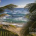 Palm Trees On Isabel Beach In Puerto Rico by Bryan Mullennix