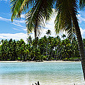 Palm Trees On The Beach, Rangiroa by Panoramic Images