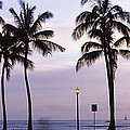 Palm Trees On The Beach, Waikiki by Panoramic Images