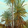 Palm Trees by Angeles M Pomata