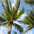 Palm Trees by Stephanie  Bland
