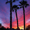 Palm Trees Sunset by Robert Bales