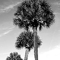 Palm Trees by Wendy Mogul