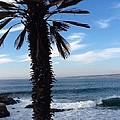 Palm Waves by Susan Garren