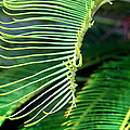 Palme Cycas by Karen Adams