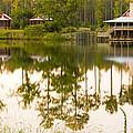 Palmetto Bluff South Carolina by Bob Pardue