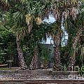 Palmetto Crossing by Dale Powell