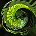 Palmetto Nautilus by Gary Holmes