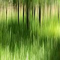 Palmetto Spring by Bill Morgenstern