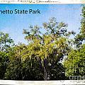 Palmetto State Park by Gary Richards