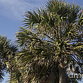 Palmetto by Teresa Mucha