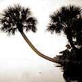 Palmettos Near St by Litz Collection