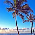 Palms 438 by Steve Lipson