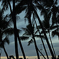 Palms At Dusk by Suzanne Luft