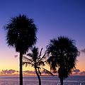 Palms At Sunrise by David Davis