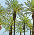 Palms by Ben and Raisa Gertsberg