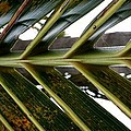 Palms E  by Rob Hans