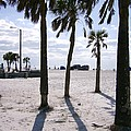 Palms by Frank Matlock