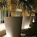 Palms In Pots by Darla Wood