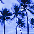 Palms In Storm Wind-bora Bora Tahiti by Frans Lanting MINT Images