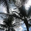 Palms In Stuart by Tiffney Heaning