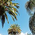 Palms In The Sky by Aimee L Maher ALM GALLERY