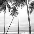 Palms by Michael Robert Hartman