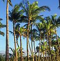 Palms On Hawaii Beach Trail by John Burk