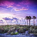 Palms On The Beach by Marvin Spates