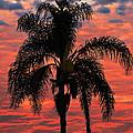 Palmtree Apocalypse by Joe Schofield