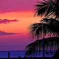 Palmtree At Sunset by Tony Garcia