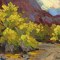 Palo Verde Trees by Diane McClary