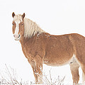 Palomino Horse In The Snow by James BO Insogna