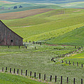 Palouse Barn And Fence by CJ Middendorf