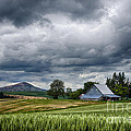 Palouse Farm And Steptoe Butte by Priscilla Burgers