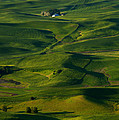Palouse Green by Mike  Dawson