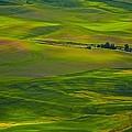 Palouse Greens by Philip Kuntz