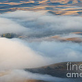 Palouse Morning Mist by Mike  Dawson
